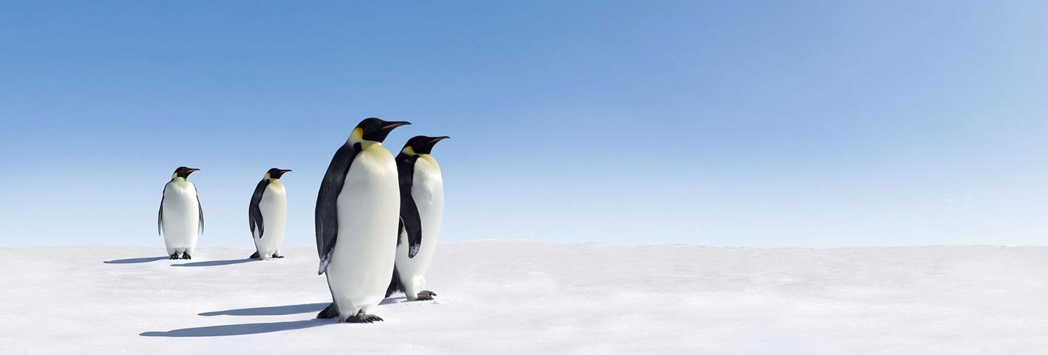 פינגווין 4.0 - ענישה וחנינת אתרים בזמן אמת
